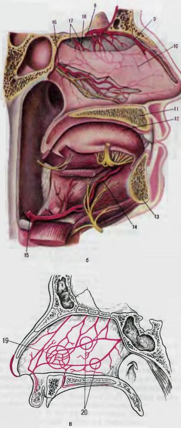 alveolaire rand gebit